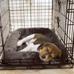 Puppies like crate training.