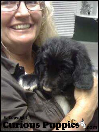 Happy Mommy with New Newfoundland x Golden Retriever Puppy