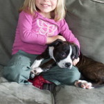 We Had Molly a Boggle Puppy for Sale, known as a Boston Terrier x Beagle Mix Breed