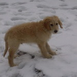 Sully in the snow