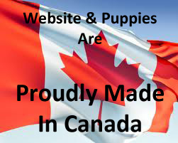 Proudly Canadian, our puppies for sale are made in Canada!