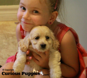 Our daughter with a little cockapoo puppies for sale