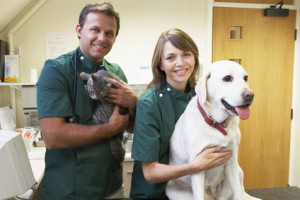 Your puppy will be taken care of at the vet, to stay up to date on how many needles a puppy needs and other vaccinations