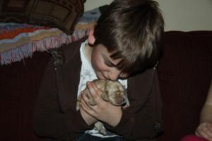 American Cocker Spaniel Puppy For Sale Picture 07