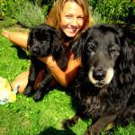 Balou – Newfoundland x Golden Retriever Puppy we had for sale