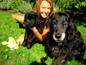 Balou-Newfoundland x Golden Retriever Puppy for sale 1