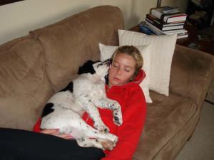 Chester-Springer Spaniel Puppy for sale 01