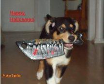 Sasha - Sheltie / Collie cross puppy 03