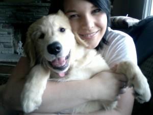 Golden Retriever Newfoundland Puppy For Sale 01