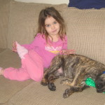 Max – A Great Dane Puppy We Had For Sale