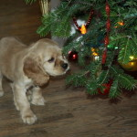 There are many things puppies for sale at Christmas can get into!