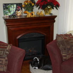 Our Boston Terrier x Beagle loves the cozy warm Christmas time!
