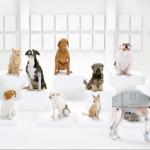 Singing Star Wars Dogs