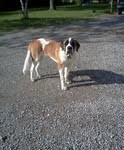Buffy Saint Bernard 03