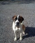 Buffy Saint Bernard 05