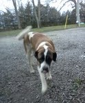 Buffy Saint Bernard 10