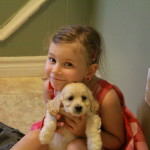 Kids are great with cockapoo puppies
