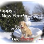 Happy New Year from Chest the cockapoo