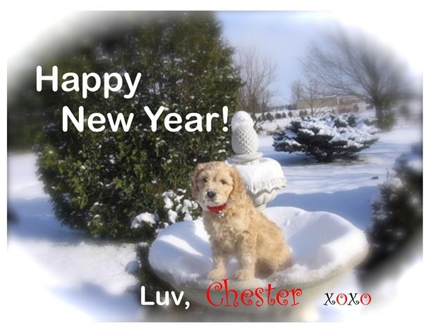 Happy New Year Cockapoo Testimonial Puppies For Sale Dogs For