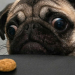 40 Super Funny Dogs