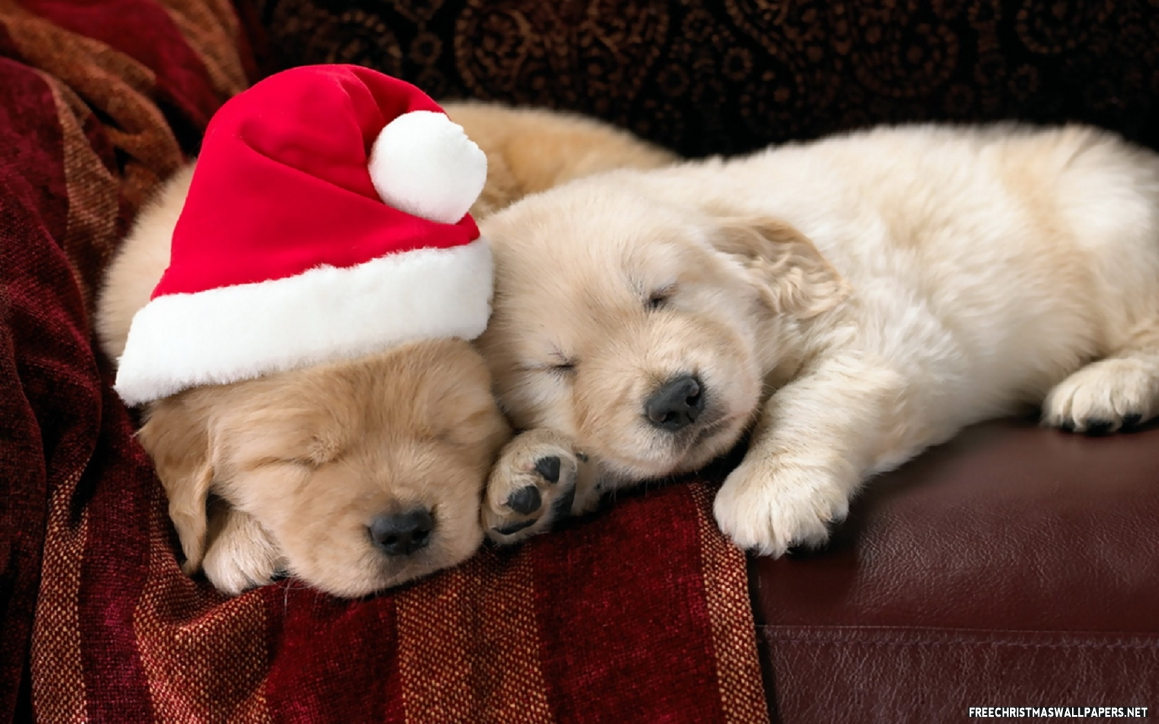 Christmas Puppies.Puppies For Sale At Christmas Puppies For Sale Dogs For